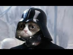Star Wars Cat Meme - best star wars memes youtube