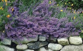 10 ornamental herbs gardening