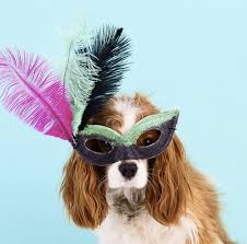Target Dog Halloween Costumes 25 Pet Halloween Costumes Cute U0027t Animal