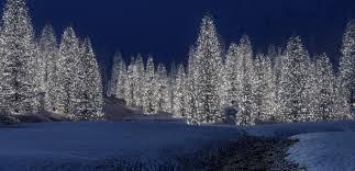 winter wonderland snowy winter scenes u0026 christmas trees