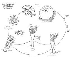life cycle of a frog coloring page awesome life cycle of apple