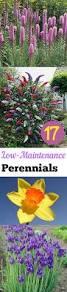 17 low maintenance perennials perennials gardens and growing plants