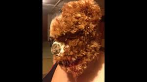 deady bear spirit halloween halloween horror teddy bear youtube