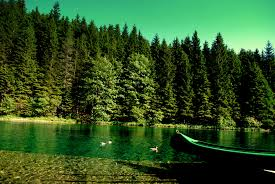 download wallpaper forest river boat nature hd background