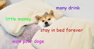 Dog In Bed Meme - doge meme much wow dog funny shiba inu meme
