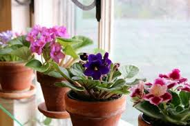 8 Houseplants That Can Survive by 10 Autumn Houseplants That Will Survive Colder Weather Brit Co
