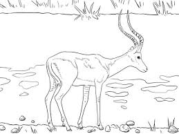 spectacular idea kudu animal coloring pages antelope with cartoon