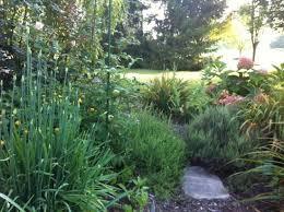weed free self fertilizing till free garden beds organic