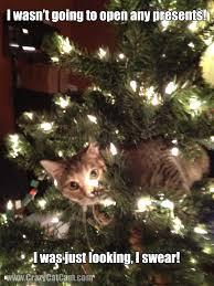 Christmas Tree Meme - foster kitten in christmas tree crazycatcam com