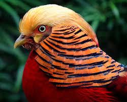12 amazing exotic birds exotic birds weird birds oddee