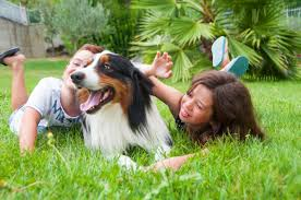 australian shepherd kid friendly are australian shepherds good family dogs canna pet