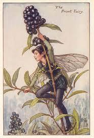 cicely barker artwork flower fairies c 1930 privet