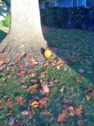 This Little Light Of Mine Blog The Story Of The Little Pumpkin Norma L Brumbaugh