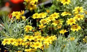 florida flower festivals in bloom this spring orlando sentinel