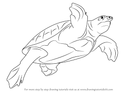 learn how to draw a pig nosed turtle turtles and tortoises step