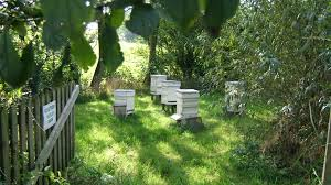 adopt a beehive and learn about bees and beekeeping in the