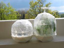 flexible mini greenhouse dome with pot clickable by graph