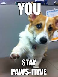 Corgi Puppy Meme - office corgi motivational posters imgur
