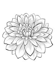dahlia flower flowers and vegetation coloring pages for adults