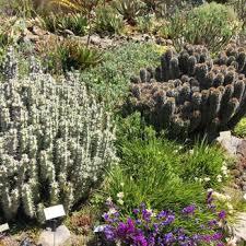 Uc Berkeley Botanical Gardens Uc Botanical Garden At Berkeley 675 Photos 231 Reviews