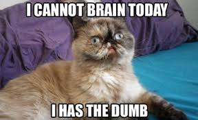 Funny Meme Cat - cannot brain today funny cat meme