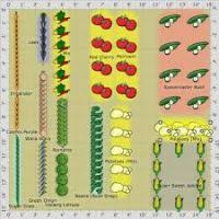 vegetable garden layout plans and spacing halflifetr info