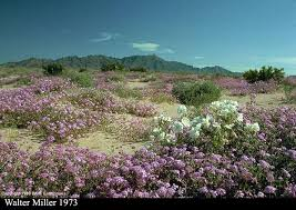 Arizona vegetaion images Flowering jpg