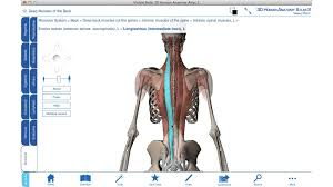 Anatomy Of Human Back Muscles Intrinsic Back Muscles 3d Anatomy Tutorial Youtube