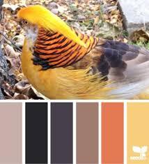 Autumn Color Schemes 68 Best Color Palettes Images On Pinterest Colour Palettes
