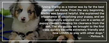 australian shepherd off leash group classes u2014 shelby semel dog training