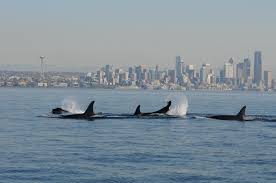 Alki Beach Trail West Seattle by The Director U0027s Blog The Whale Trail