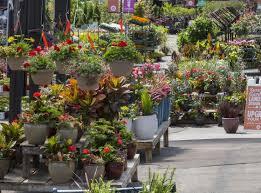 sunnyside gardens minneapolis gardening u0026 landscaping
