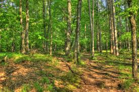Wisconsin forest images Free stock photo of trees and forest at brunet island state park jpg