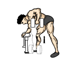 Flat Bench Press Dumbbell Dumbbell Exercise Illustrations To Help You With Your Dumbbell