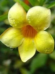Tropical Rainforest Plant Species List - tropical rainforest plants and animals plants tree pictures