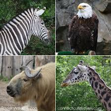 Rhode Island wild animals images Day trip idea roger williams park zoo in providence rhode island jpg