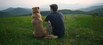 dog euthanasia pet hospice and euthanasia services nashville tn
