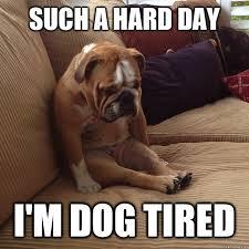 Tired Dog Meme - tired dog memes image memes at relatably com