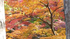 multi colored leaves on various trees stock footage 1732612