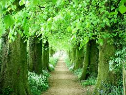 tree tunnel walkway portland oregon places to visit 3