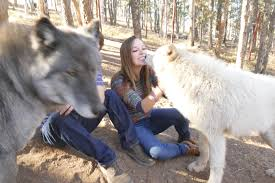 Colorado wildlife tours images Get up close and personal with wolves at colorado wolf and jpg