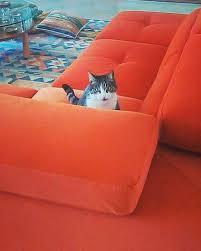gatti divani un divano a prova di gatto lineatre arredamenti alberobello