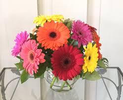 gerbera daisies 12 gerbera daisies in bowl in kirkwood mo kirkwood florist