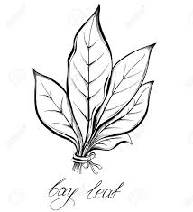 les herbes de cuisine herbes de cuisine et les épices bay feuille de laurier