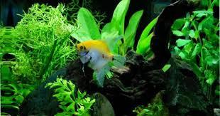 best led light for planted tank best led lights for aquarium plant growth best led lights for plante