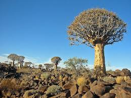 interesting facts about the quiver tree and quiver tree forest