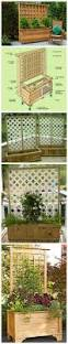 Backyard Privacy Landscaping Ideas by Best 25 Backyard Privacy Ideas Only On Pinterest Patio Privacy