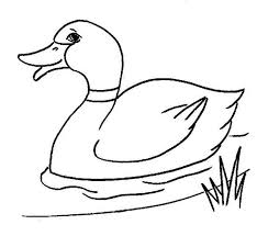 coloring page coloring pages duck ducks page of 17 kids animal