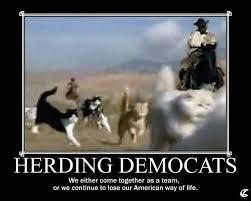Herding Cats Meme - cats jpg