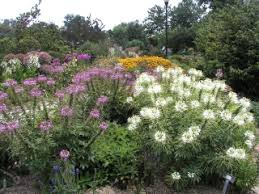 Flowering Shrubs New England - a xeriscape garden